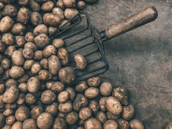 ジャガイモの語源はインドネシアに?ジャガイモの語源とその歴史