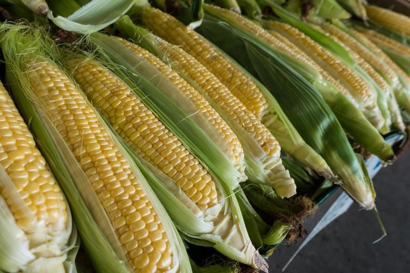 トウモロコシを病気から守る!知っておくべきトウモロコシの病気5つまとめ