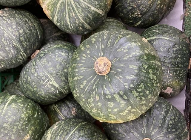 美味しいカボチャを育てるために!カボチャ栽培5つの病気とその対策方法