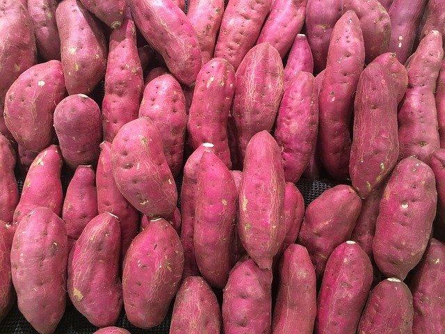 美味しいサツマイモを育てるために!サツマイモの4つの害虫と防除方法