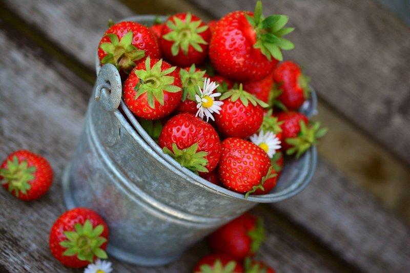 イチゴを害虫被害から守れ!イチゴによくつく4つの害虫