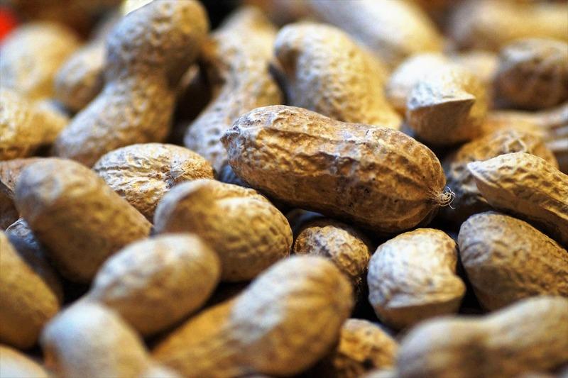 美味しいピーナッツを食べるために!知っておきたいラッカセイの4つの病気と対処法