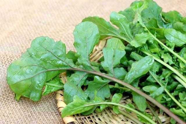 知っておきたいルッコラの害虫!ルッコラ栽培5つの害虫とその防除方法