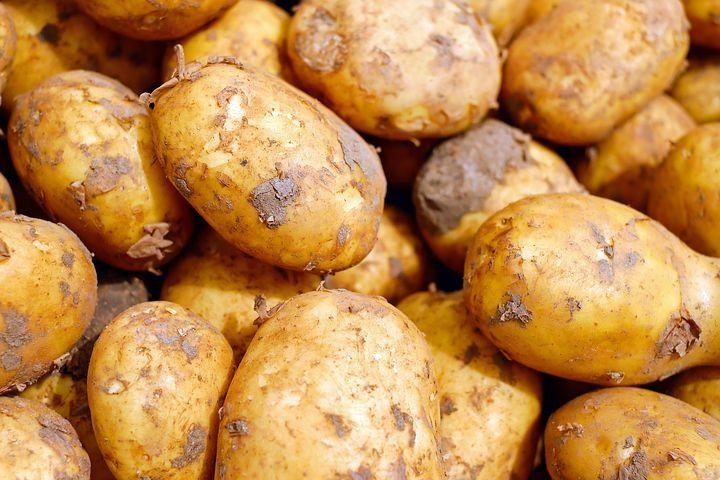 ジャガイモを害虫から守るために!ジャガイモの栽培における6つの害虫対策