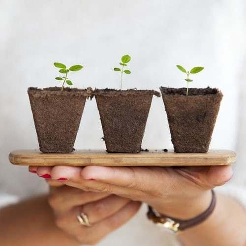 家庭菜園におすすめの8つの野菜!初心者でもlお家で簡単に栽培できる野菜を紹介します。