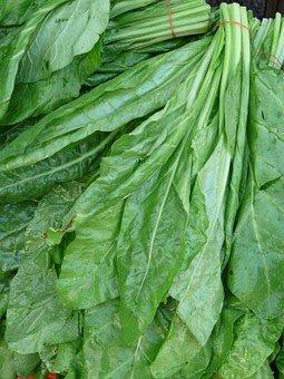 ホウレンソウを栽培される方へ!ホウレンソウ栽培における6つの病気とその対処法