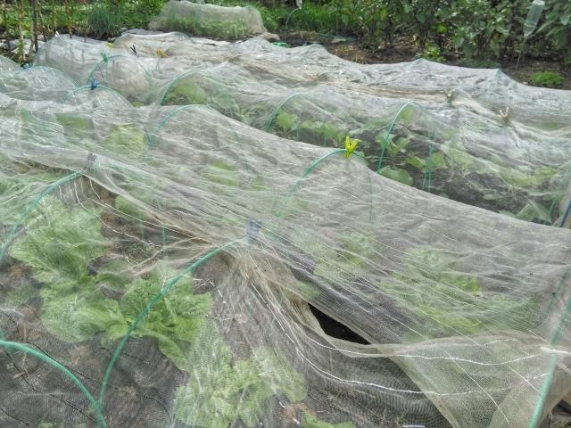 寒冷紗・防虫ネットの正しい使い方!野菜栽培で大活躍、寒冷紗・防虫ネットの使い方まとめ
