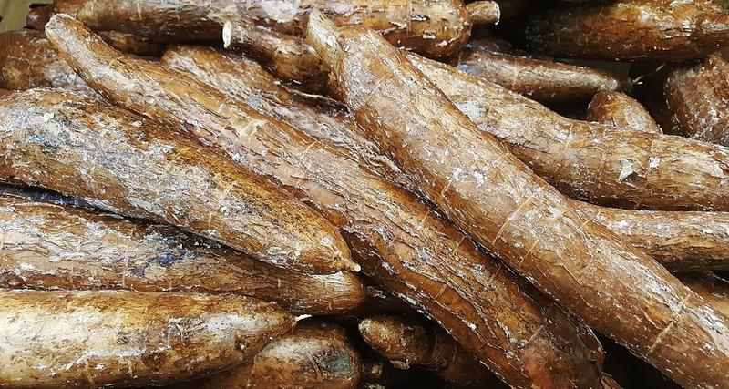 キャッサバとは?原産地から作り方、品種の違いまで、タピオカの原料キャッサバの基本情報まとめ