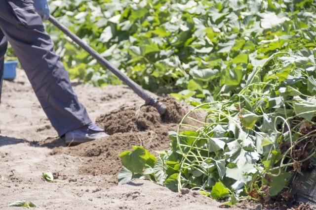 初めて鍬を使う園芸の初心者へ!鍬の正しい使い方と種類