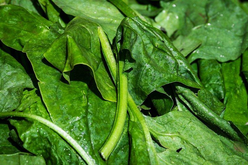 ほうれん草の栽培レシピ プロ農家に学ぶ美味しいほうれん草の育て方
