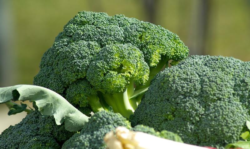 知っておくべきブロッコリーの病気と予防